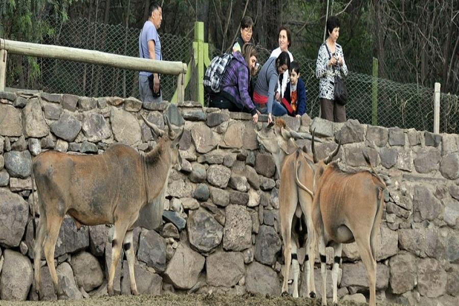 """Buscan """"adoptantes responsables"""" para animales del ex zoo de Mendoza"""