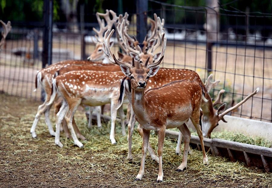 El ex zoo de Mendoza recibió más de 5000 pedidos de adopción de animales