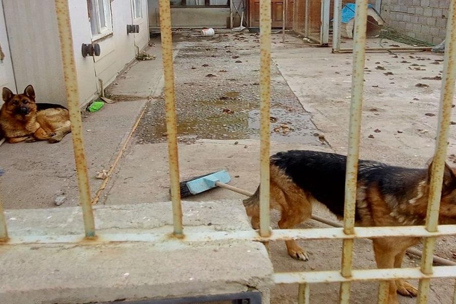 Se logró rescatar dos canes que llevaban un año en cautiverio