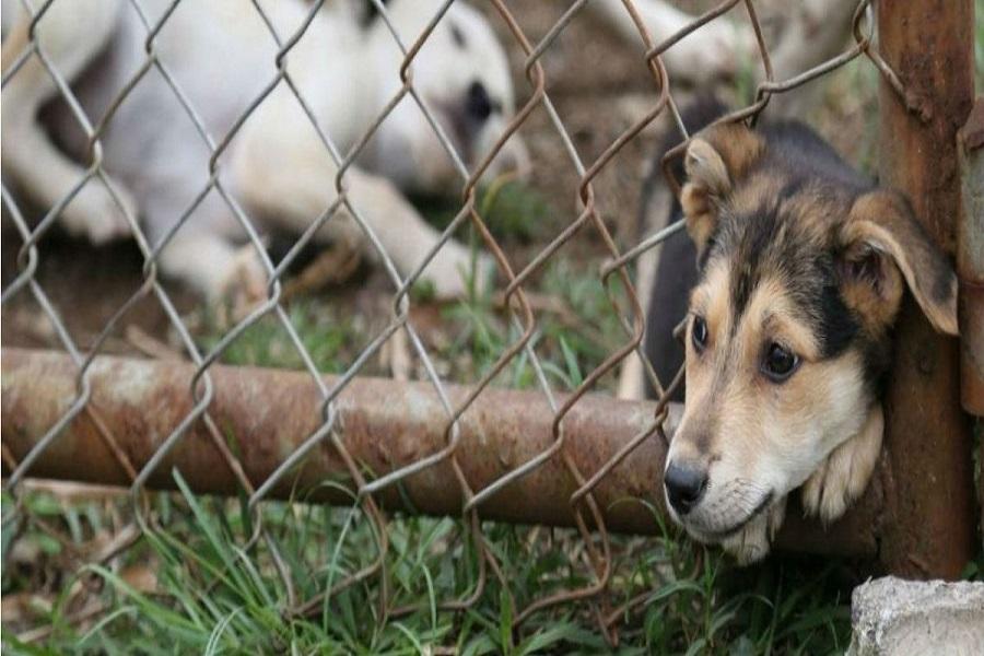 Crean una fiscalía para concentrar la investigación sobre el maltrato animal