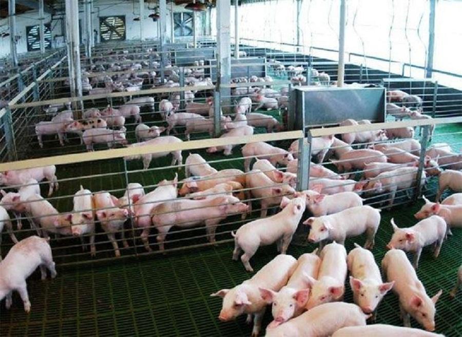 La Pampa prohíbe el ingreso de carne porcina proveniente de EE.UU.