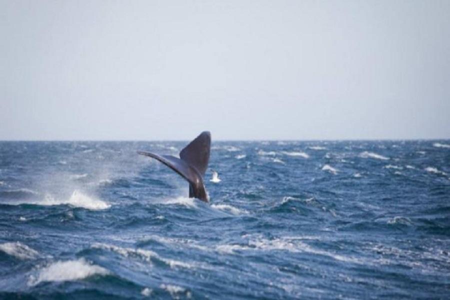 La temporada oficial para el avistaje de ballenas va desde junio hasta diciembre.