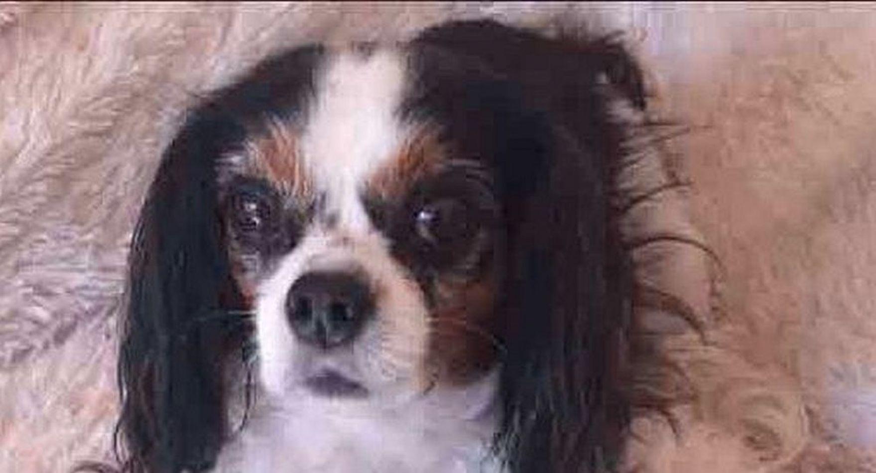 Reino Unido quiere luchar contra la cría intensiva de perros y gatos