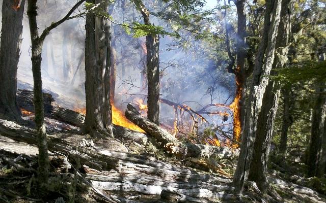 Gobierno entregó otro financiamiento para la protección del bosque fueguino