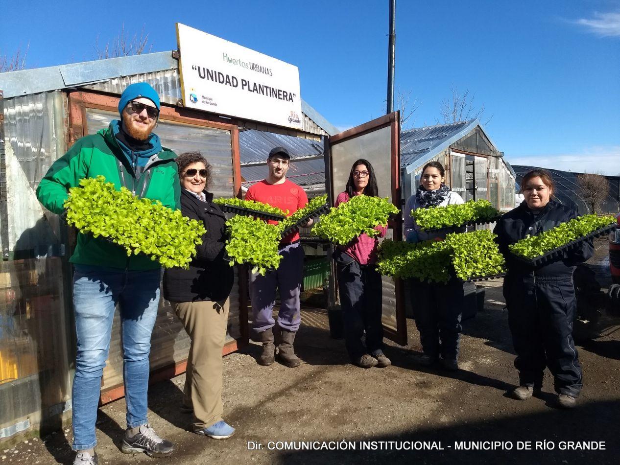 Se entregaron plantines de lechuga a productores hortícolas