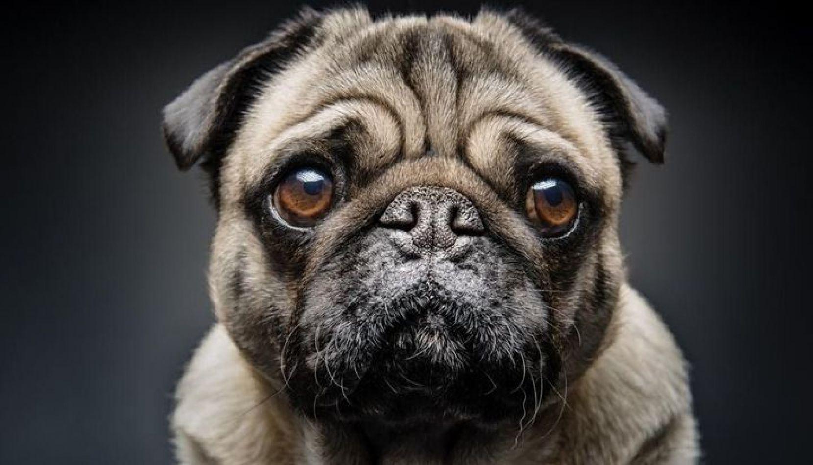 El Día Nacional del Perro se celebra en su conmemoración por iniciativa de la escritora Cora Cané.