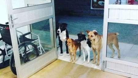 Cuatro perros esperaron en la puerta de un hospital a que su dueño sea atendido