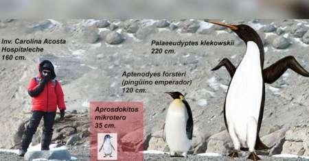 Científicos argentinos descubren cráneo completo de pingüino gigante en la Antártida