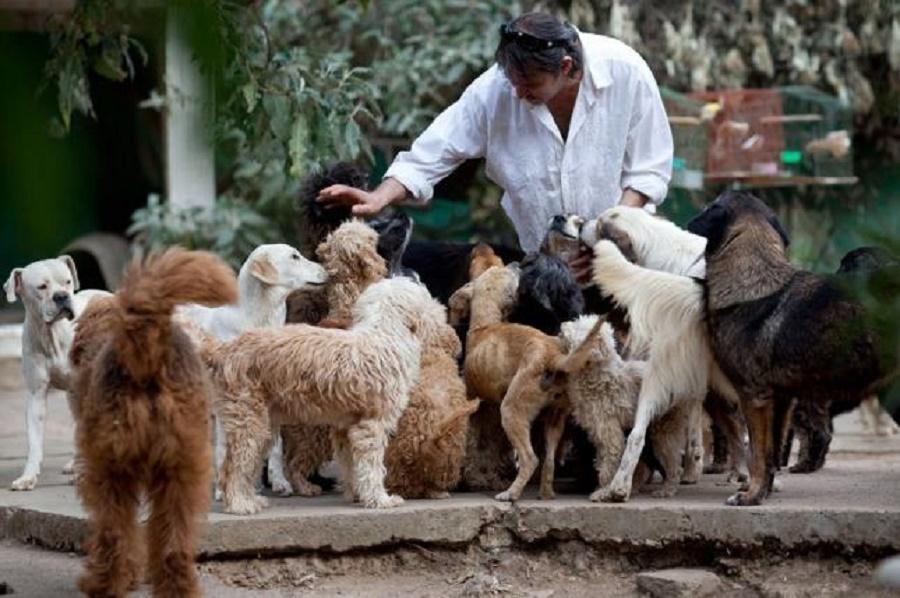Santa Fé: Dispondrán de cuchas públicas para unos 30.000 perros abandonados