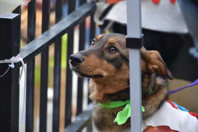 Impulsada por Paulino Rossi, se llevó adelante una jornada de adopción de mascotas