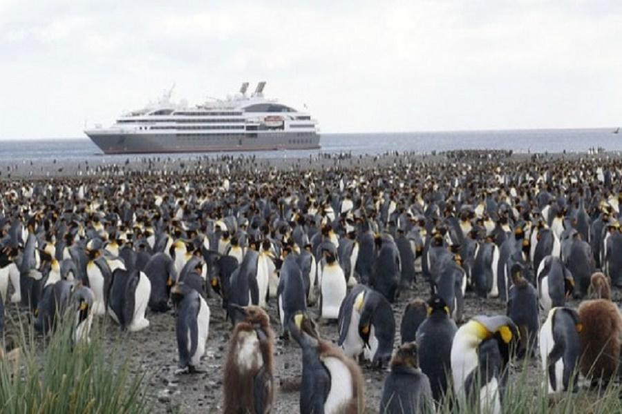 Antártida: Los pingüinos transportan contaminantes por el impacto humano