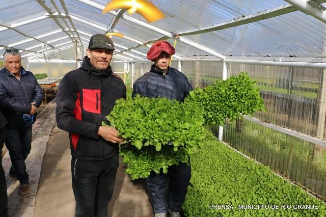 Huertas urbanas: Entregaron más de 22 mil plantines a productores locales