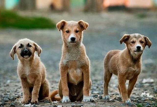 Proponen instalar frigoríficos para comercializar carne de perro