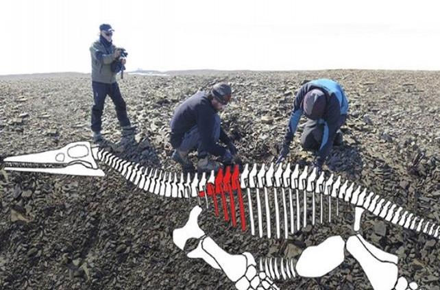 Hallaron restos de lagarto gigante del jurásico en la Antártida