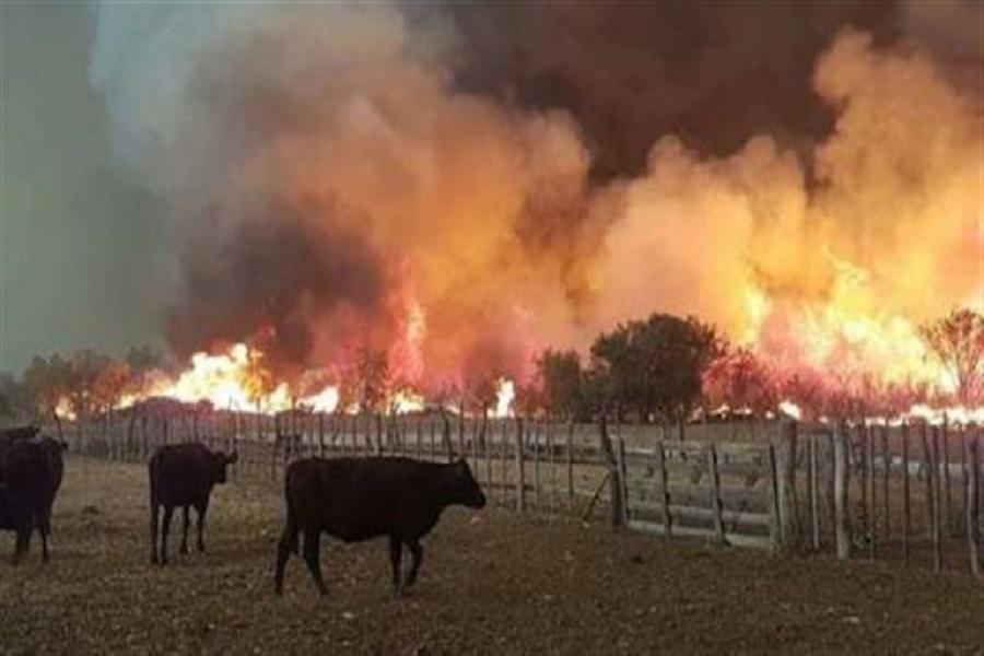 Incendios forestales: 230 mil hectáreas quemadas en Mendoza y La Pampa