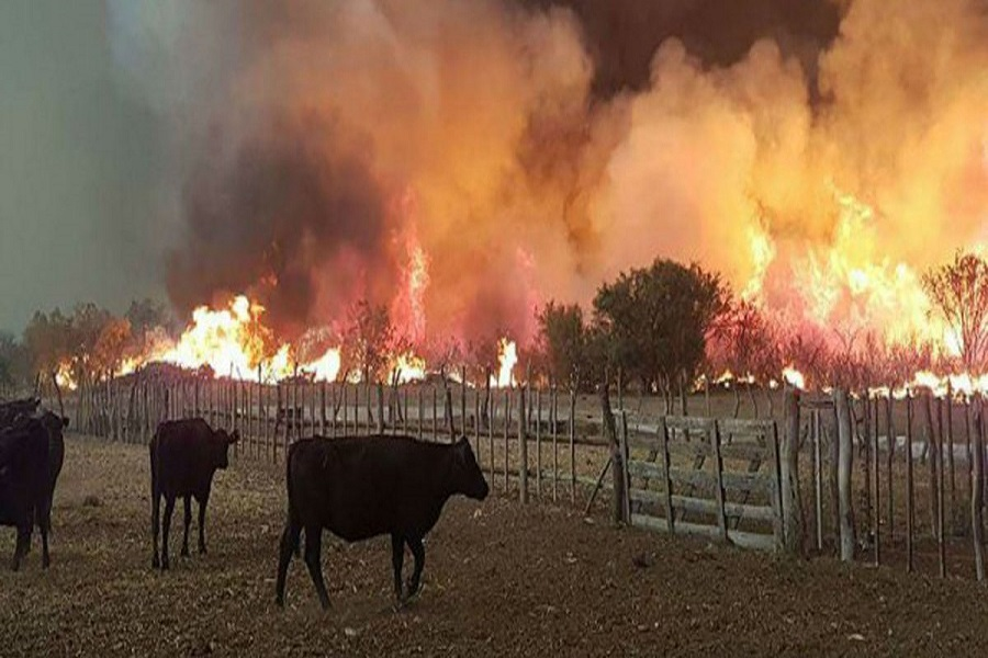 Mendoza: Lanzan una colecta para ayudar a los animales afectados por el incendio
