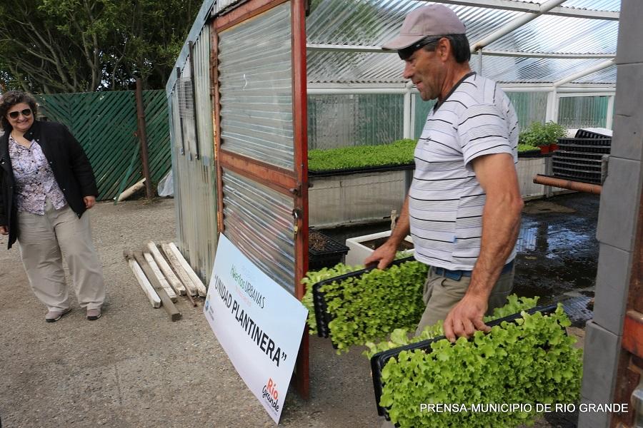 Huertas urbanas: Nueva entrega de plantines a productores