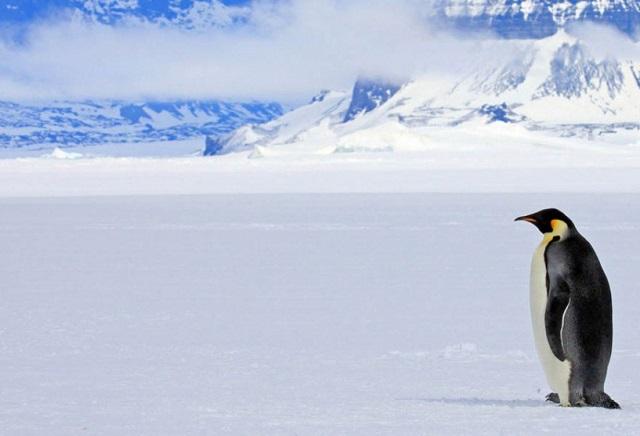 Clima: Más nieve en la Antártida provoca baja del calentamiento