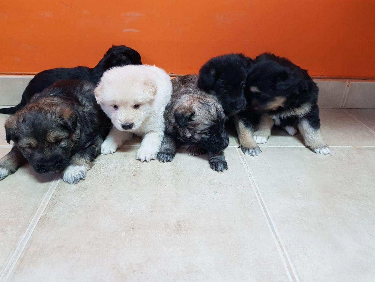 Campaña de aopción de mascotas