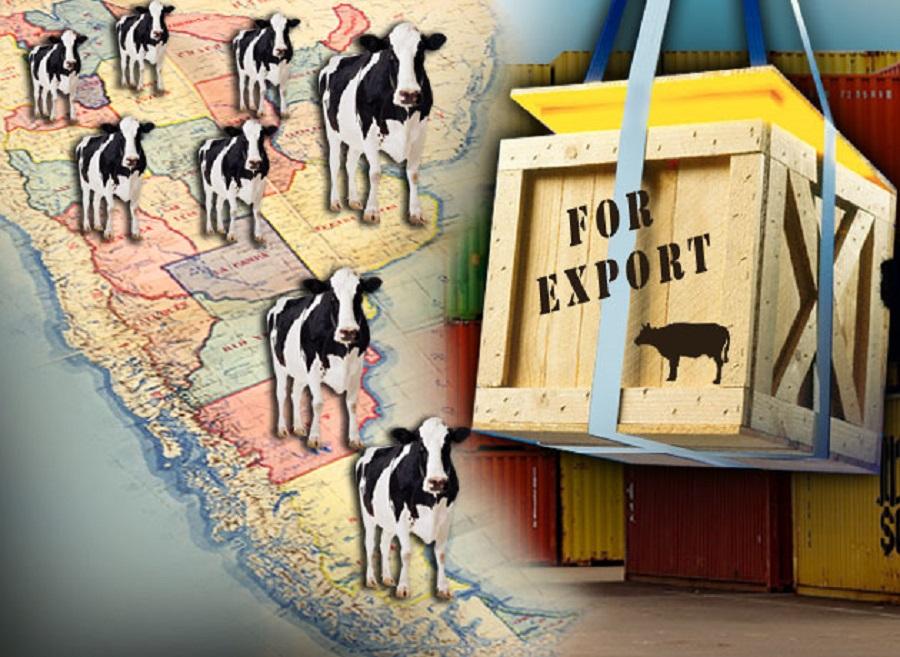 Dos empresas japonesas analizan importar carne vacuna de la Patagonia