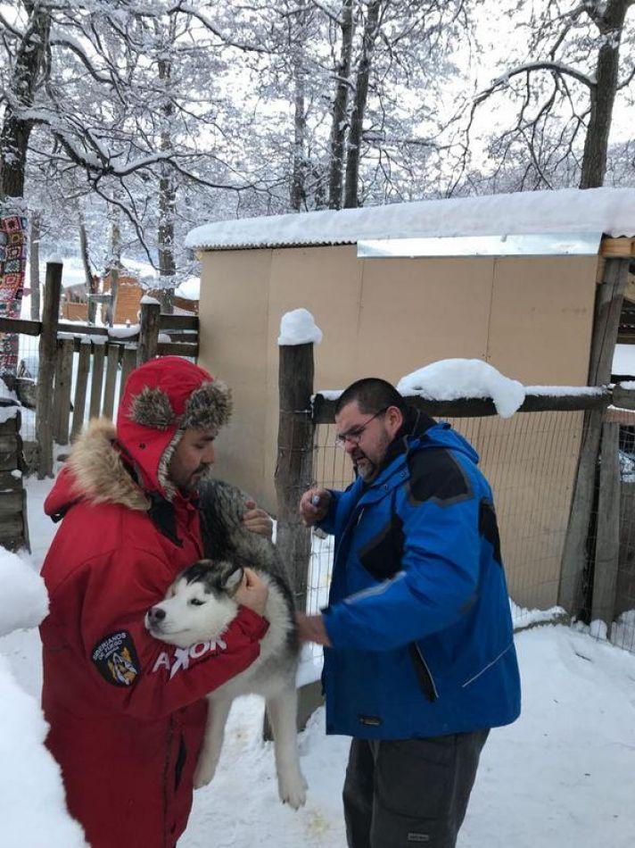 Chipeado y controles a canes de centros invernales
