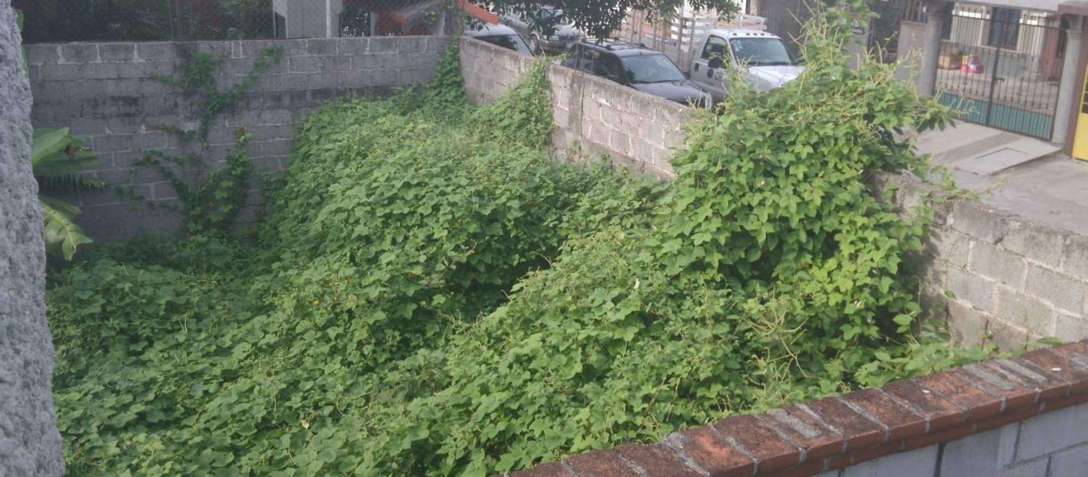 Proyecto promueve usar terrenos baldíos para fines comunitarios