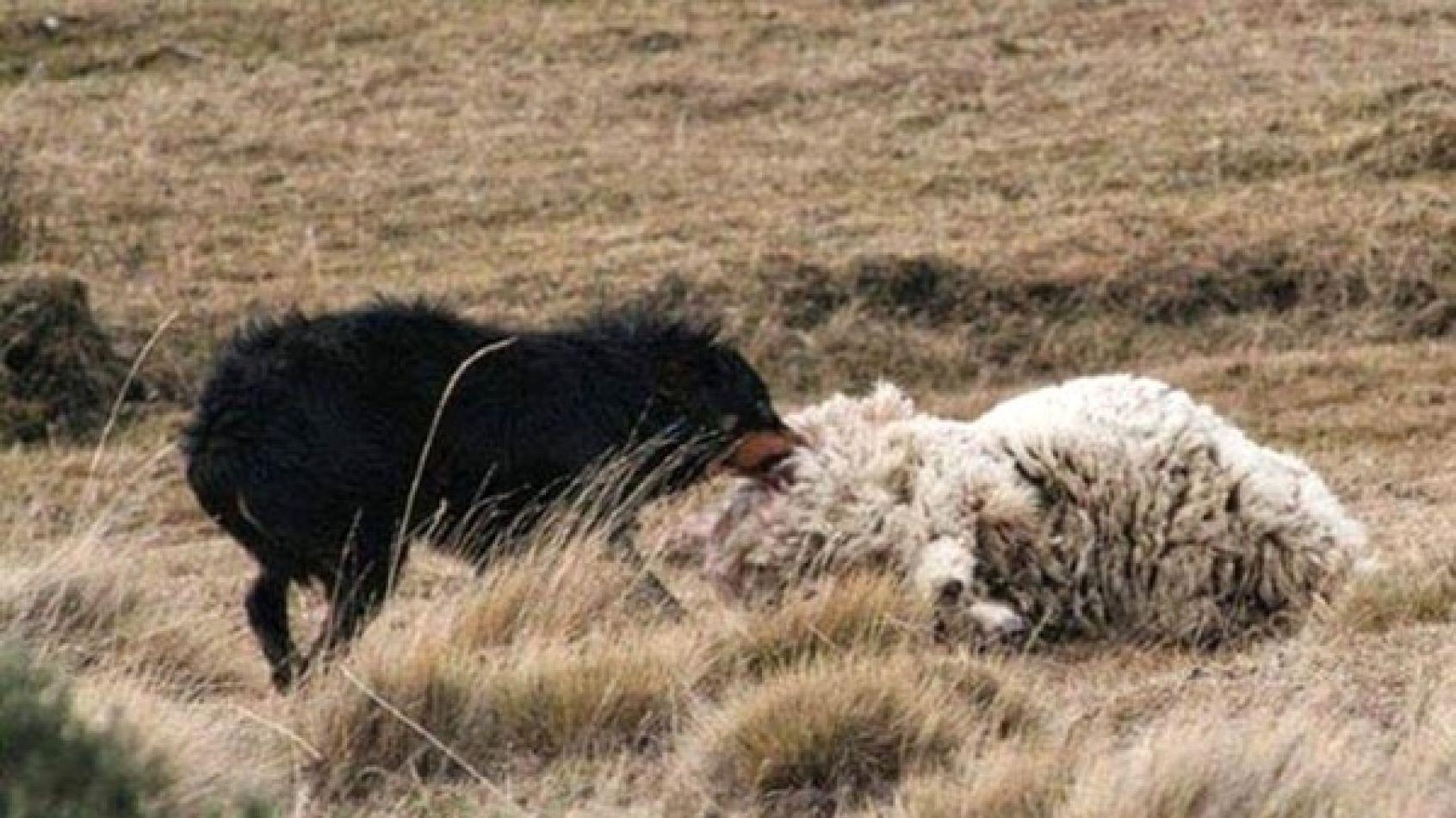 Gobierno avanza en el programa de control de perros asilvestrados