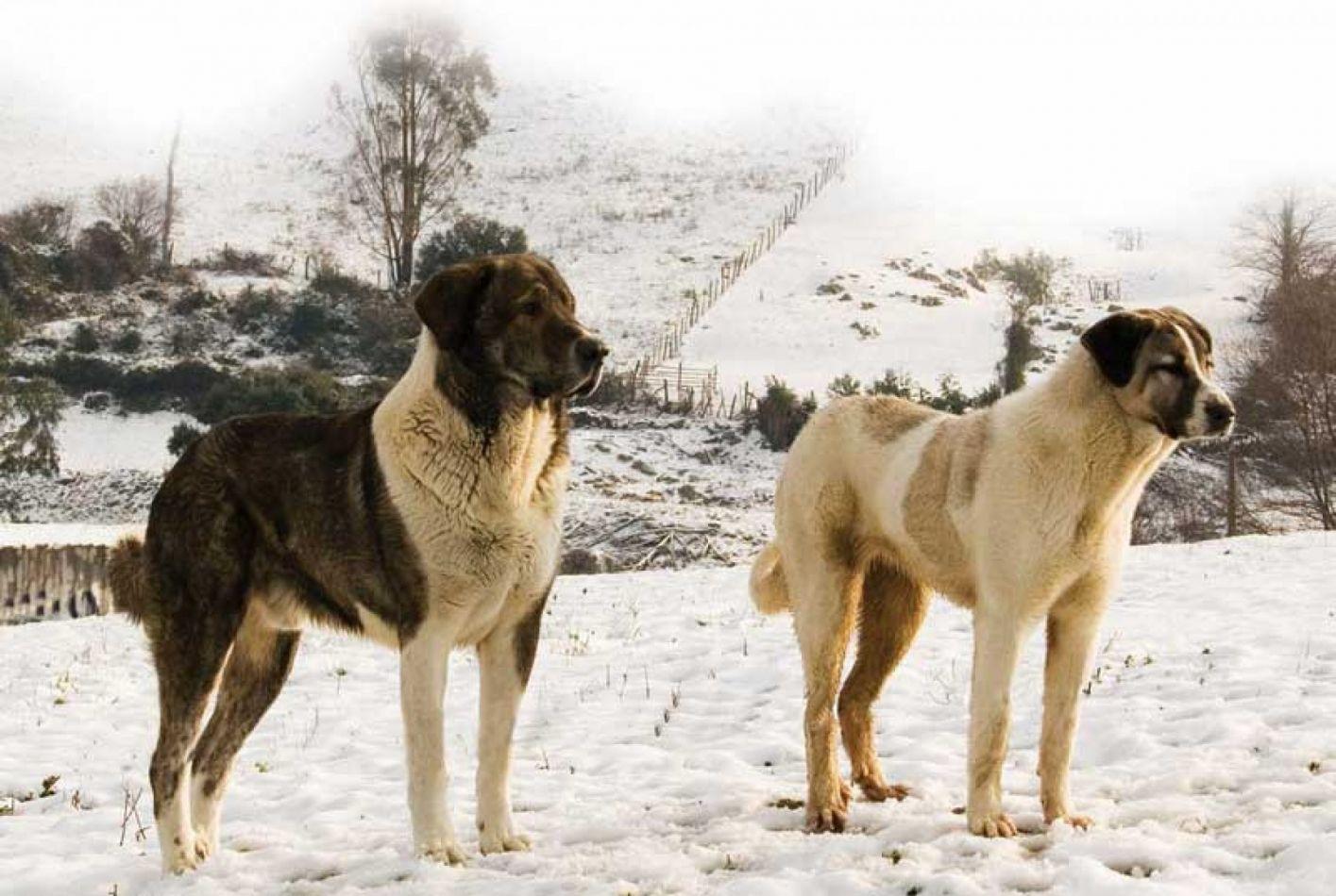 Control de perros asilvestrados