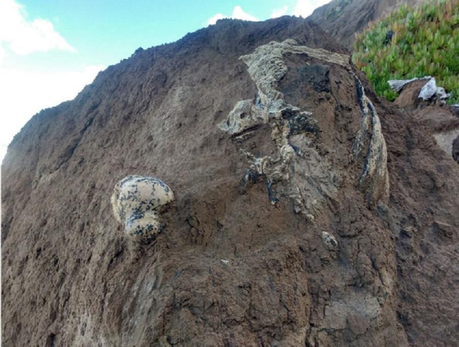 Hallan restos de un perezoso de 3 millones de años en Mar del Plata