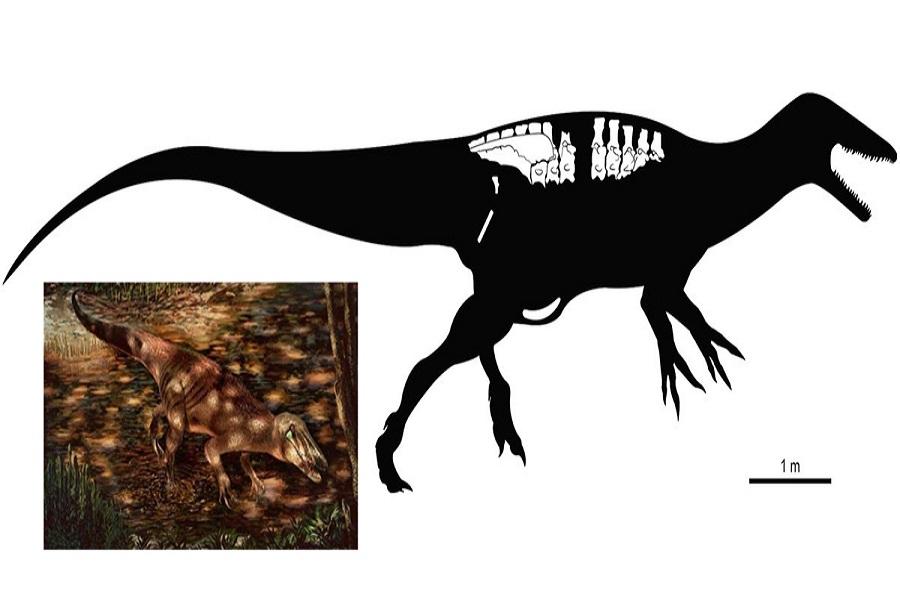 Neuquén: Hallan un dinosaurio con garras gigantes de 85 millones de años