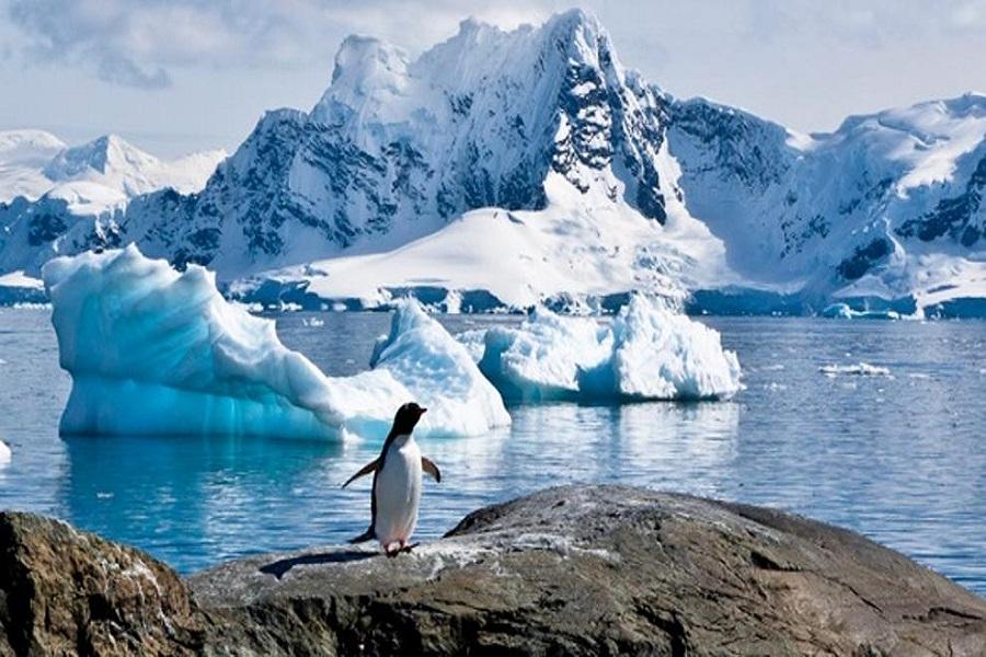 Puertos sorteará pasajes ida y vuelta en crucero a la Antártida Argentina