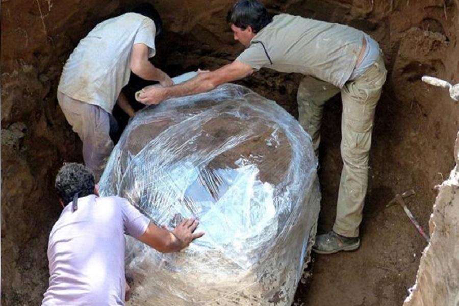 Descubren una familia de gliptodontes de 600 mil años en San Pedro