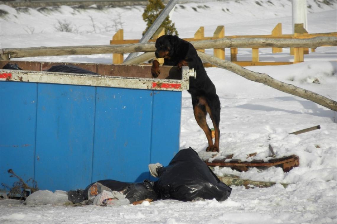 Tierra del Fuego, bajo amenaza por miles de perros salvajes que atacan a personas y al ganado
