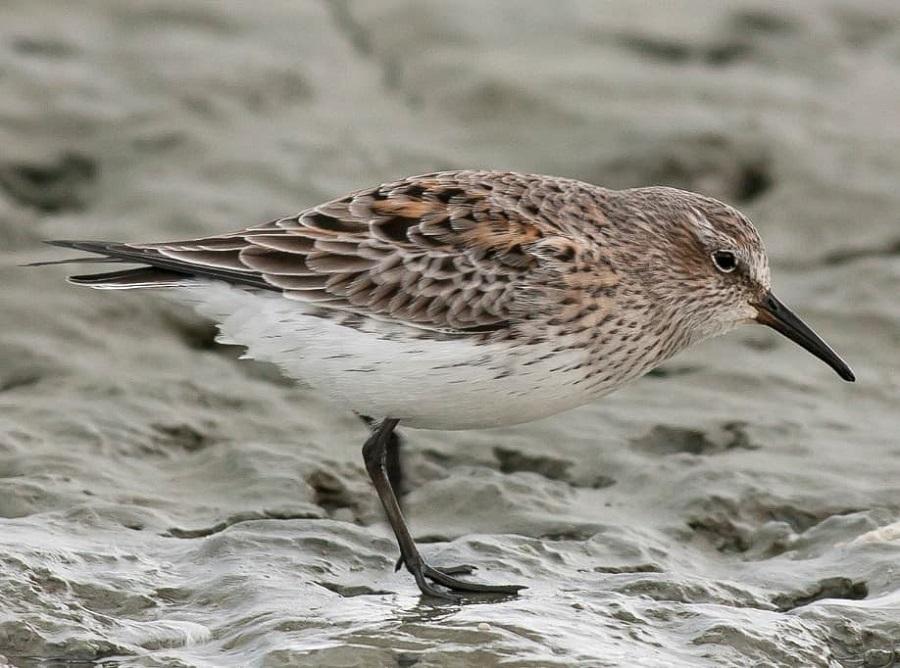 El Centro de Interpretación de Aves de la Reserva Costa Atlántica se suma al Global Big Day