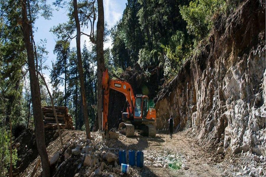 Villa La Angostura: Mapuches denuncian a Manu Ginobilli por permitir talar tierras ancestrales