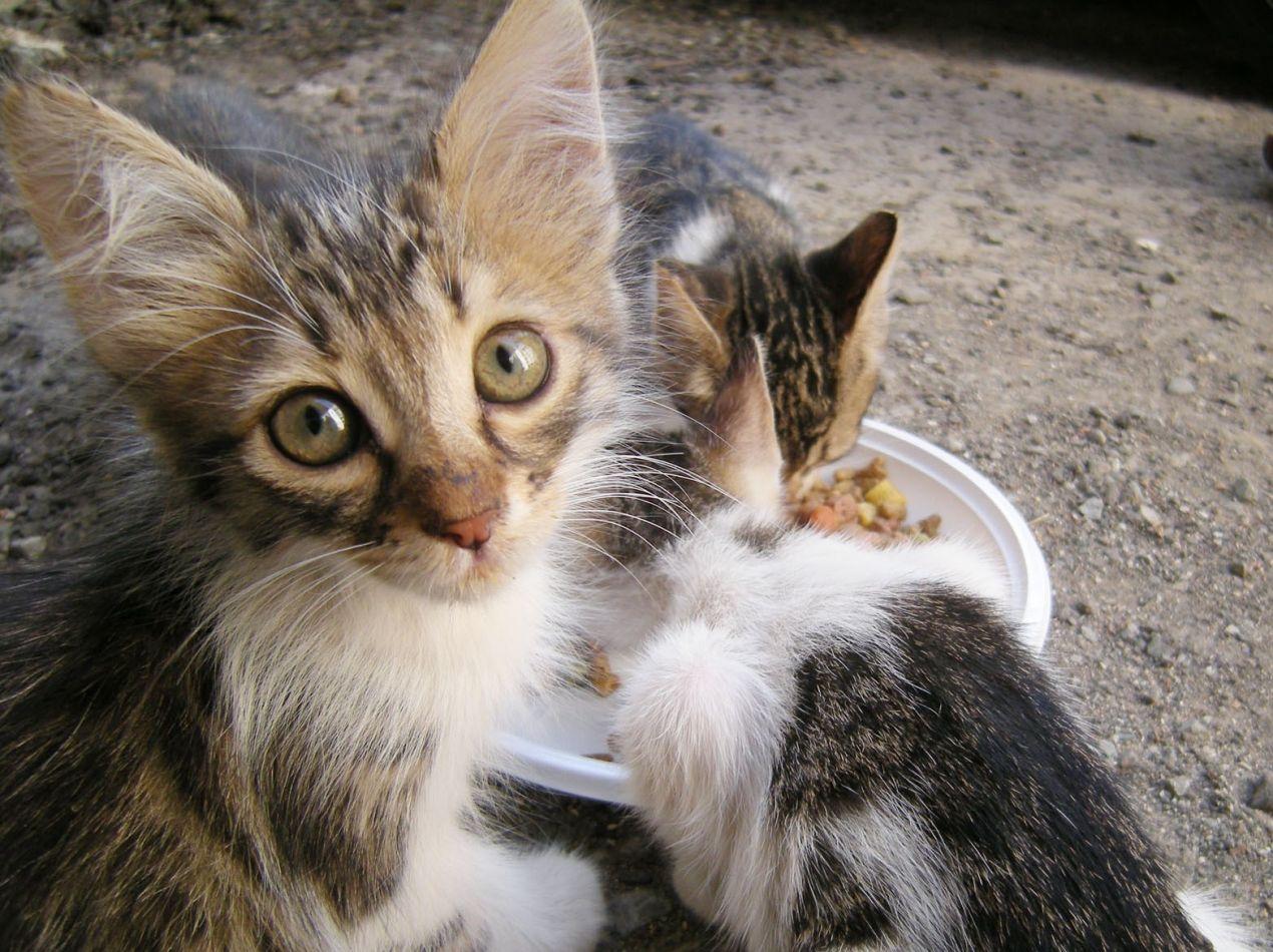 Primera campaña de castración felina en la ciudad