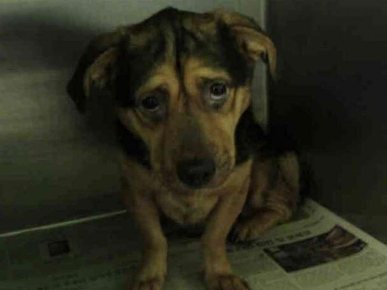 La historia de la perra más triste de California