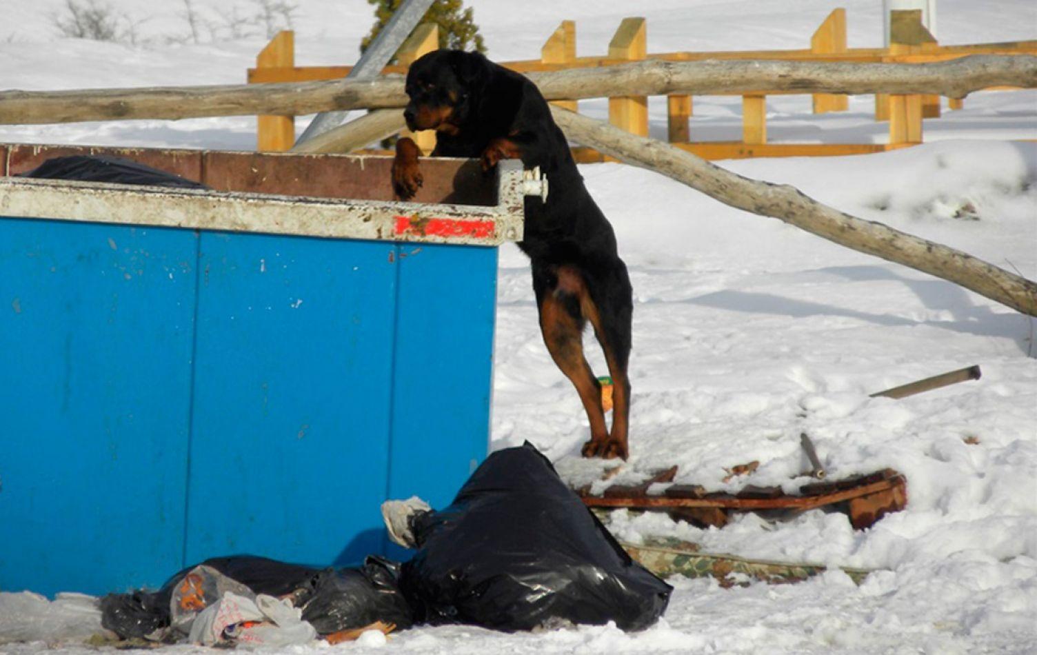 Arcando, manifestó su preocupación por los perros sueltos