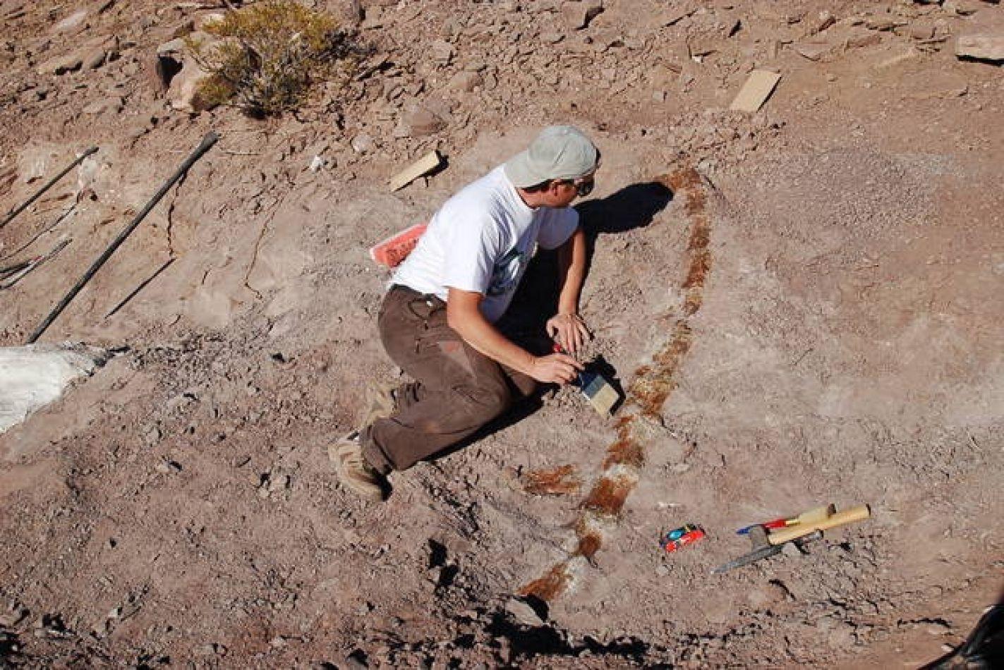 """""""Alfredito"""", un nuevo dinosaurio saurópodo descubierto en la Patagonia argentina"""