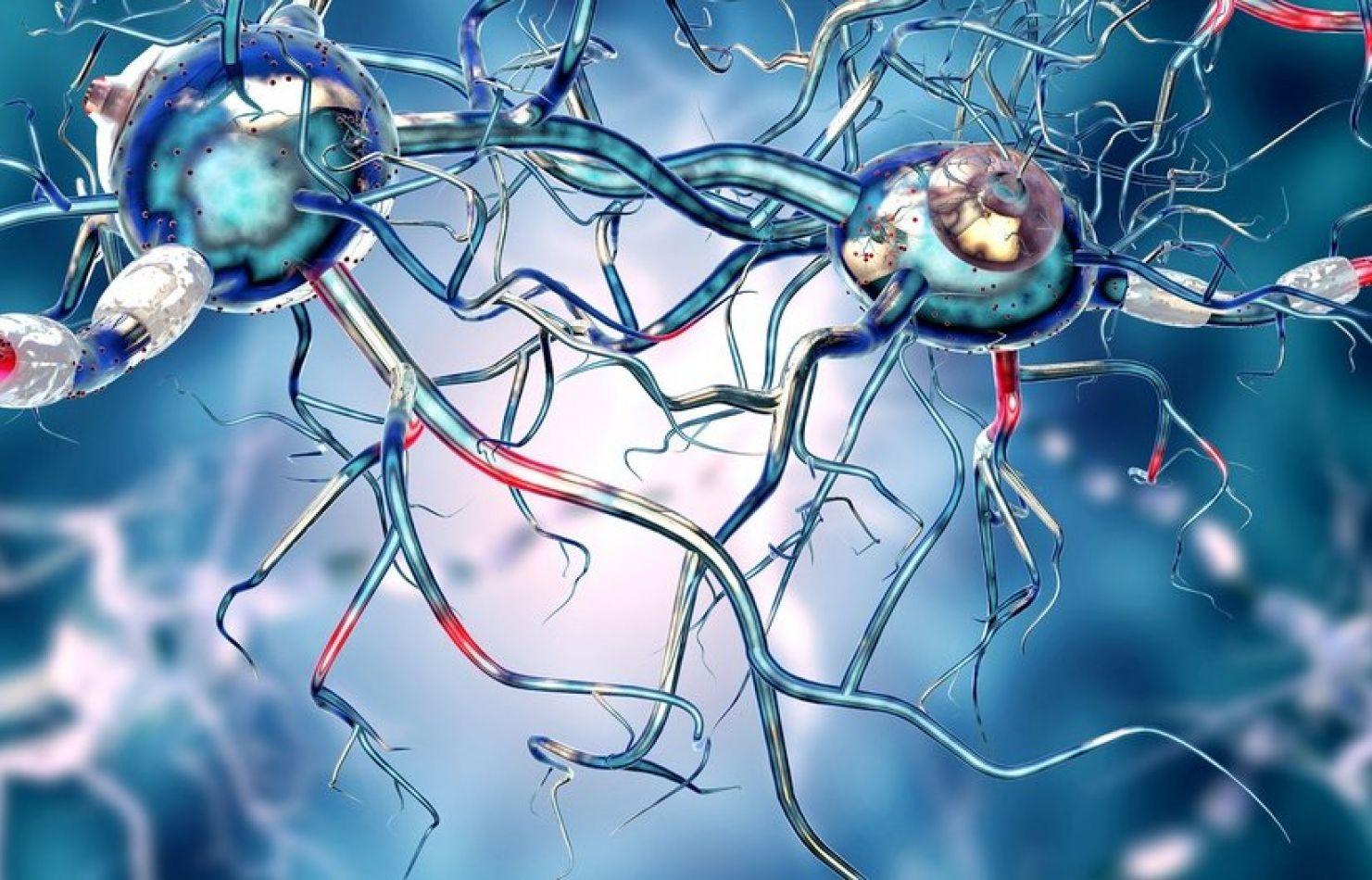 investigadores japoneses anunció este viernes haber trasplantado células madre pluripotentes
