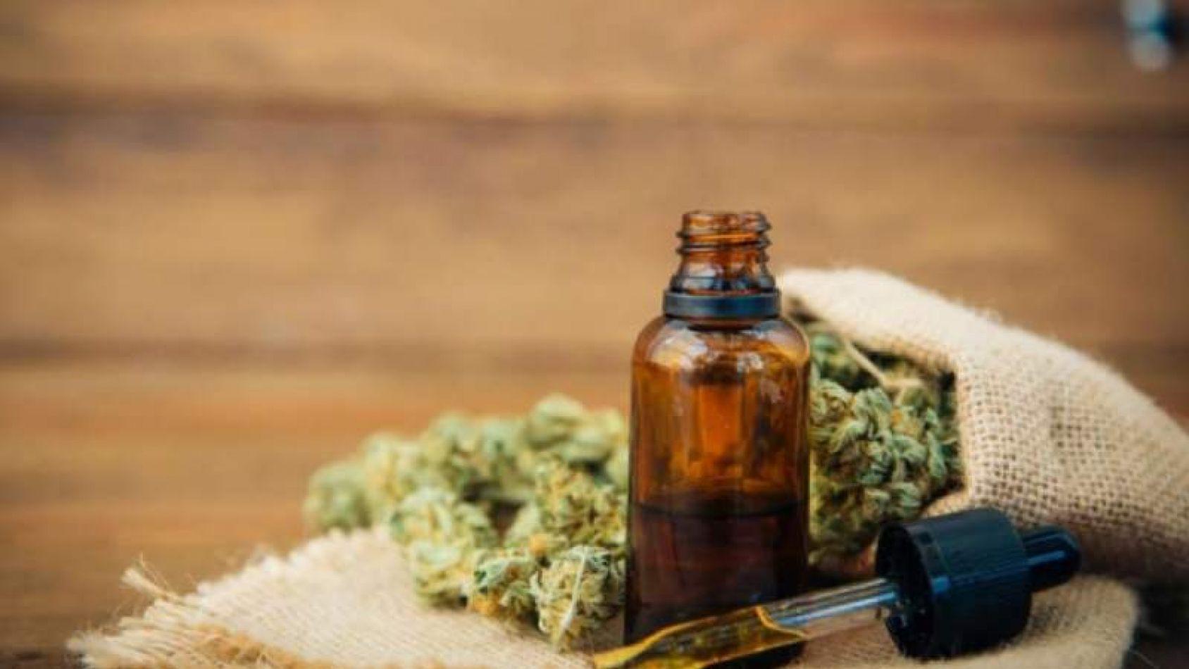Proponen crear registro de consumidores de aceite de cannabis