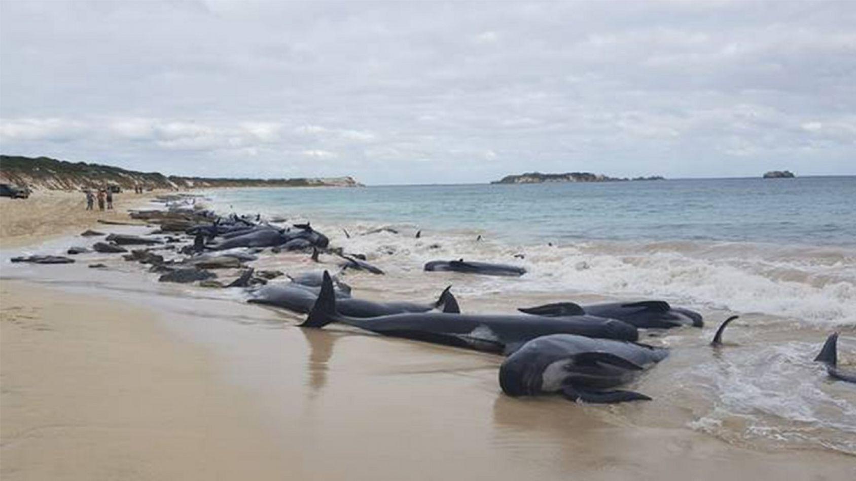 Imágenes satelitales permitirán identificar ballenas varadas