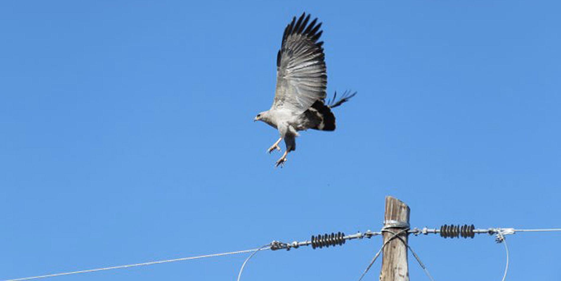 Mendoza tiene la primera zona de tendido eléctrico que protege a las aves
