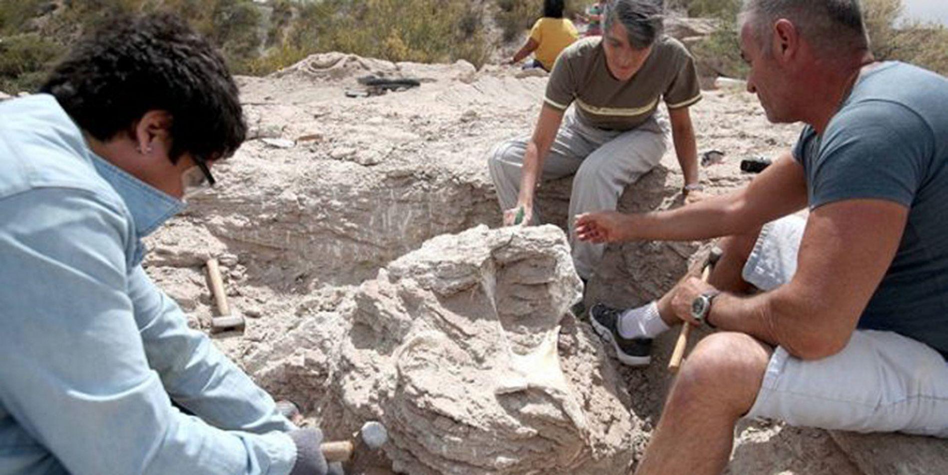 Hallan restos fósiles de un Titanosaurio de 85 millones de años