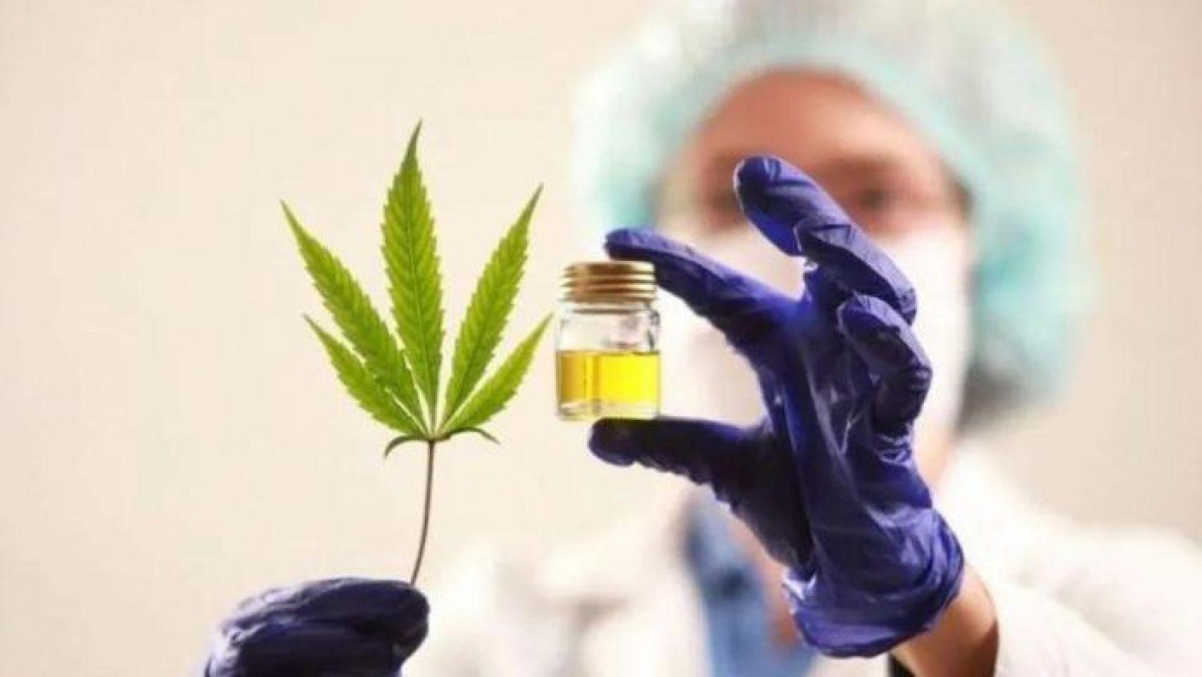 Ocho de cada diez chicos tratados con cannabis superaron la epilepsia refractaria