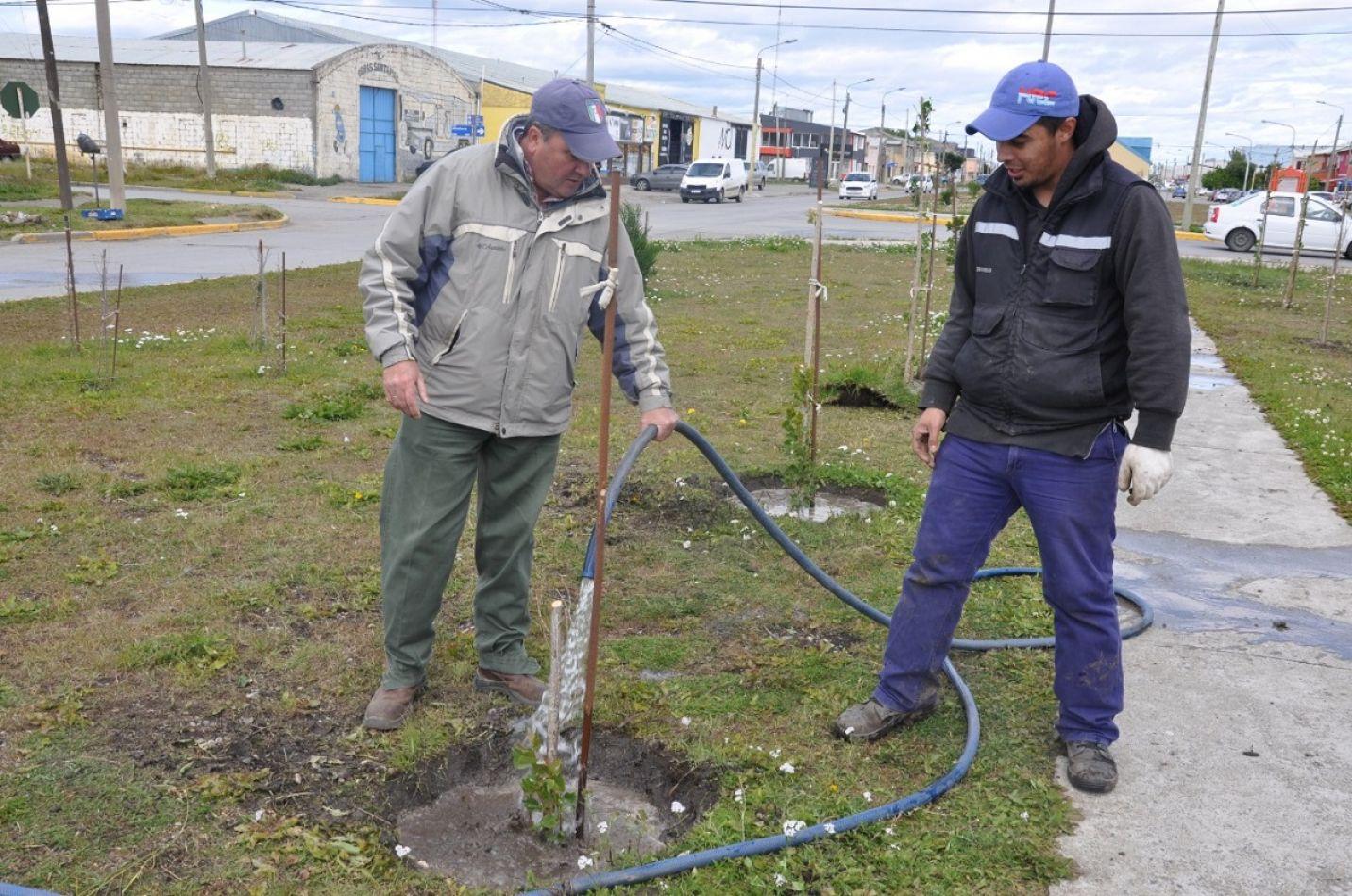 Río Grande avanza con su plan de forestación