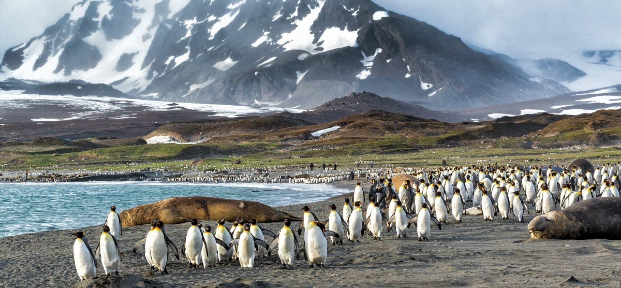 Los pingüinos de las Malvinas sufrirán del calentamiento global