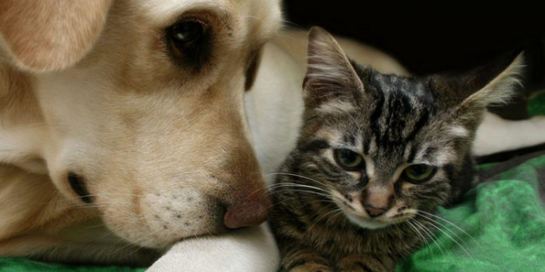 Tenencia responsable de las mascotas.
