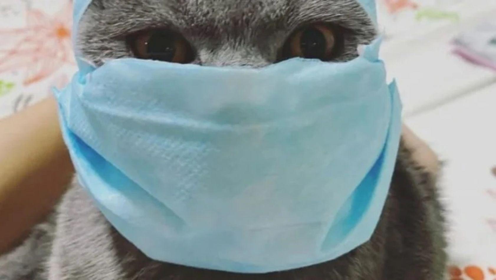 La foto del gato contagiado con COVID-19 y que dio la vuelta al mundo.