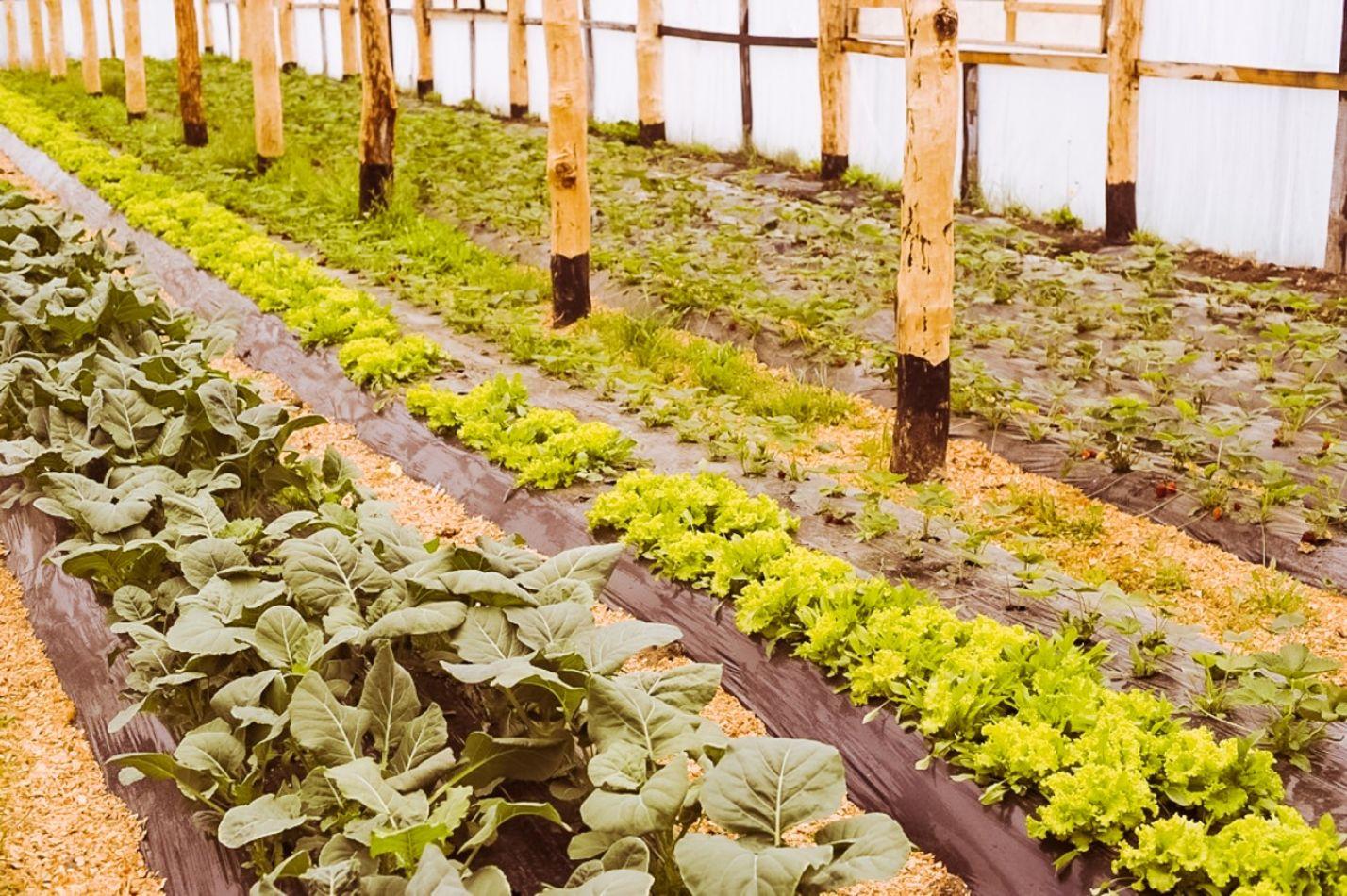 Tierra del Fuego apuesta a la producción de productos frescos